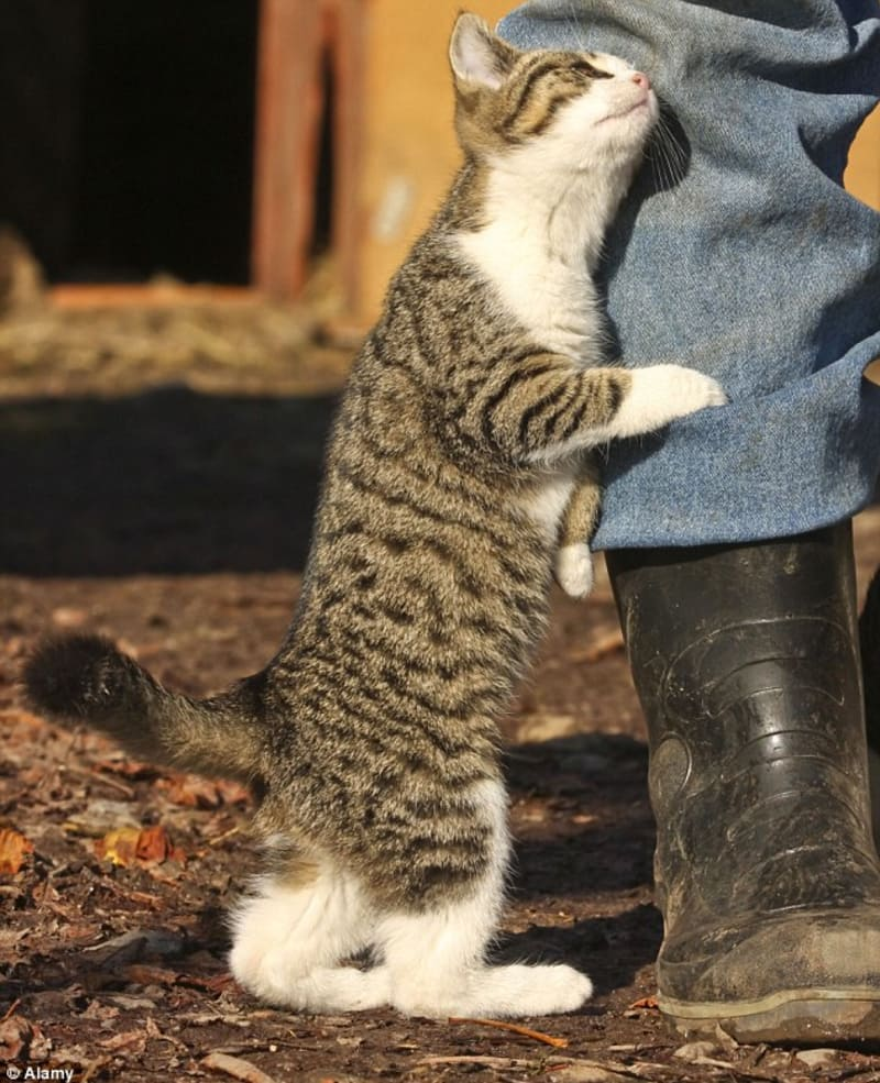 7 weird cat behaviors and what they mean