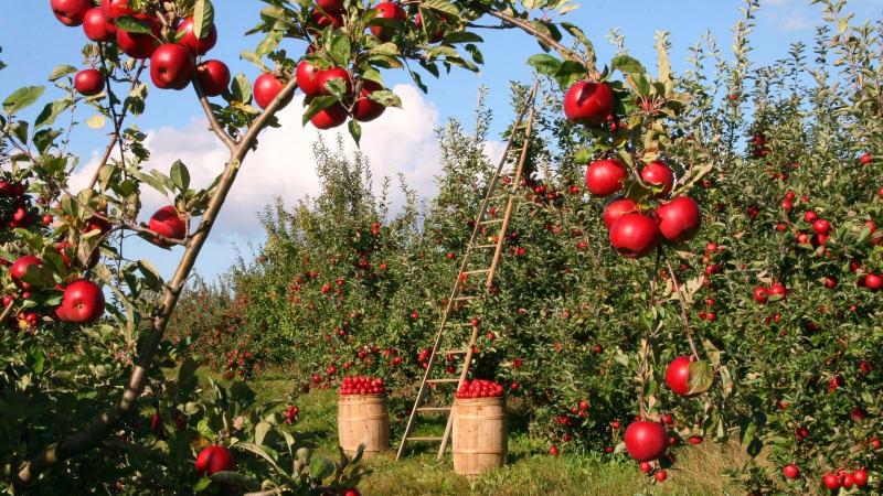 Ilustrasi tempat berkebun