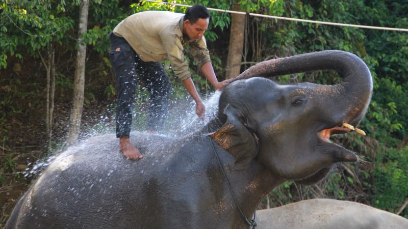 Wisata gajah di CRU Sampoinet Aceh Jaya