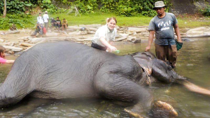 Pengunjung sedang memandikan gajah di Tangkahan