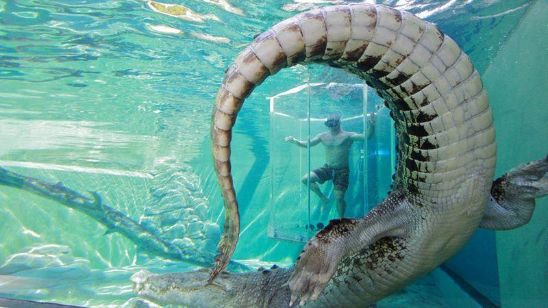 Buaya Muara di Crocosaurus Cove