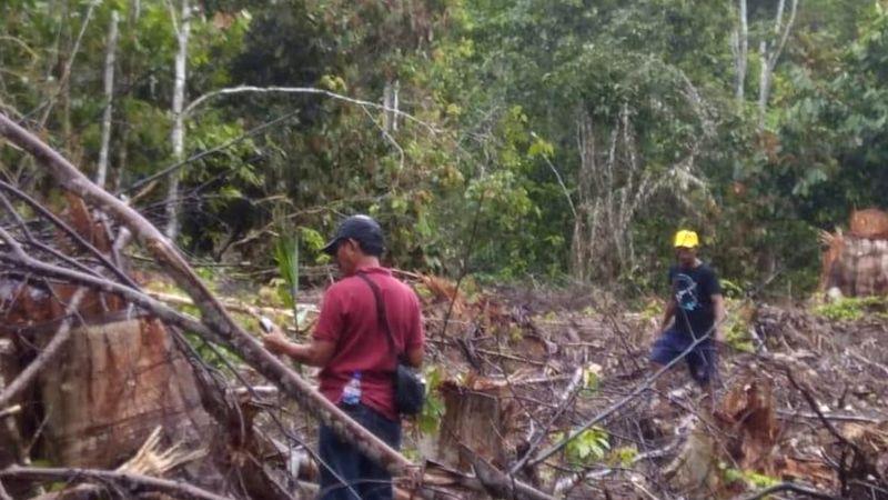 Kementerian LHK gagalkan ilegal loging