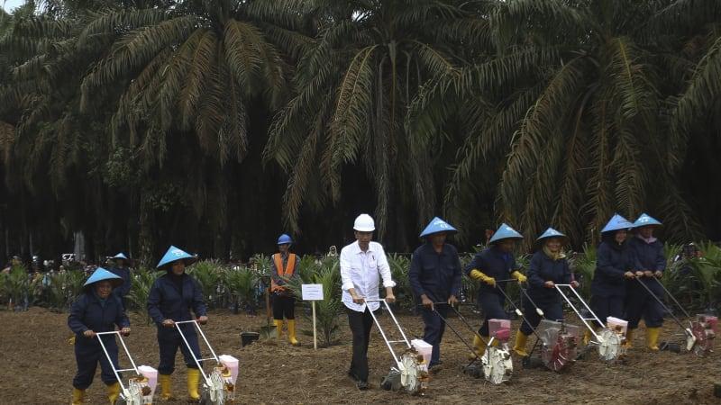 Jokowi kunjungan kerja di Kabupaten Musi