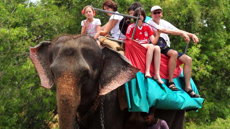 Ternyata Ini 5 Atraksi Wisata yang Melanggar Hak Hidup Hewan Gan!