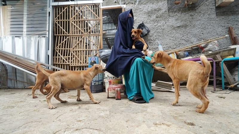 Hesti Sutrisno merawat 11 anjing dan 20 kucing.