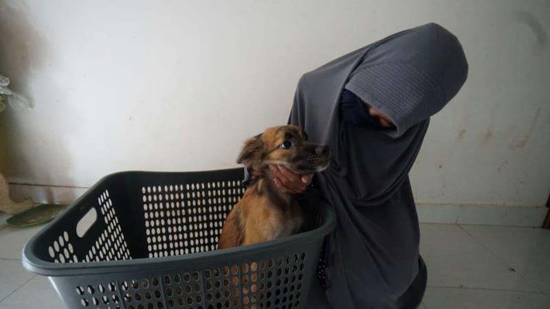 Hesti Sutrisno merawat 11 anjing dan 20 kucing