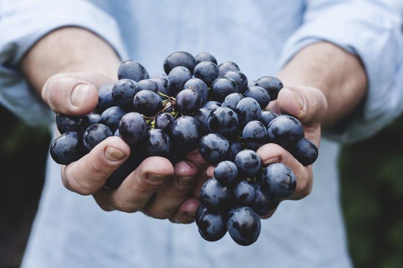 Ilustrasi Buah Anggur