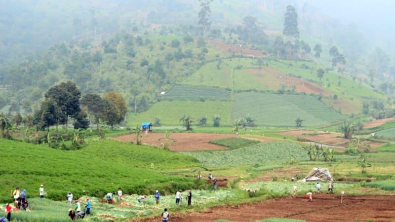 Pertanian di kaki Gunung Wayang