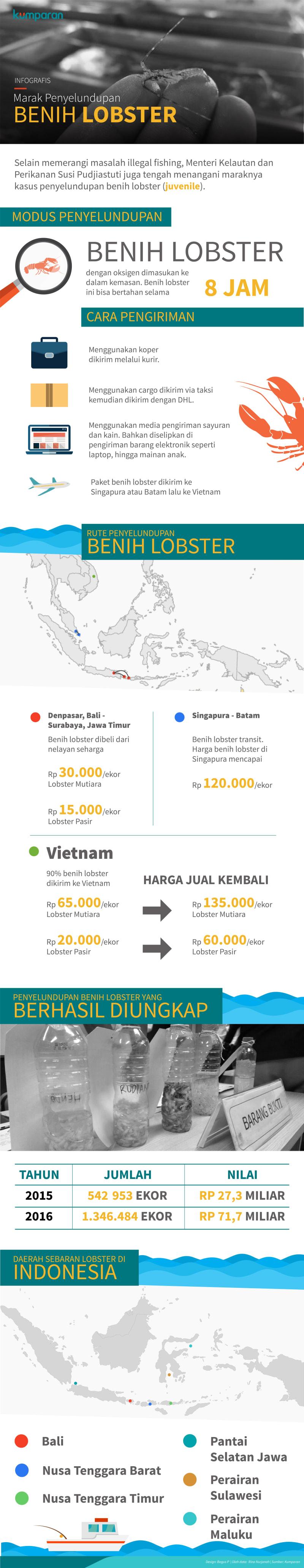 Infografis Penyelundupan Lobster