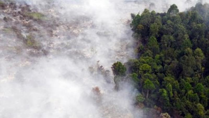 Kebakaran Hutan Riau 2015