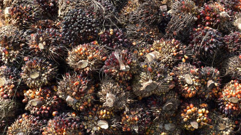 Tumpukan kelapa sawit