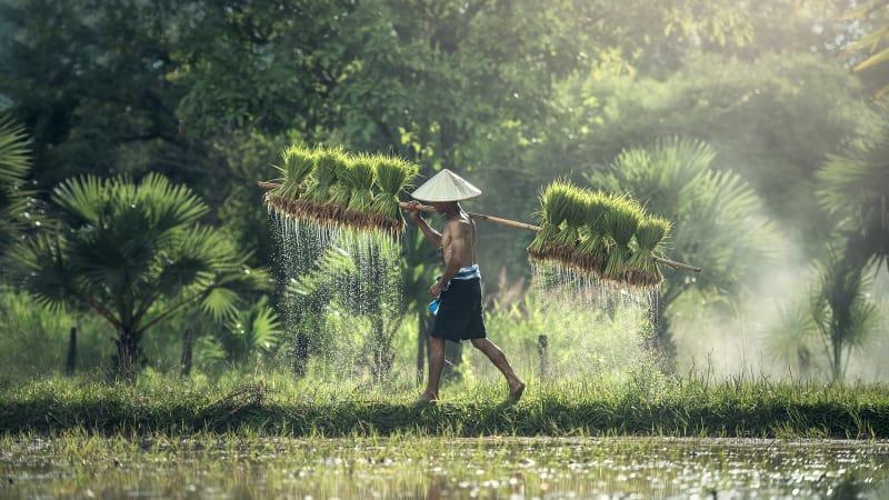Potret petani Indonesia