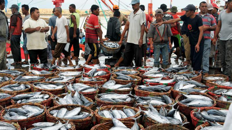 Nelayan lelang hasil tangkapan ikan