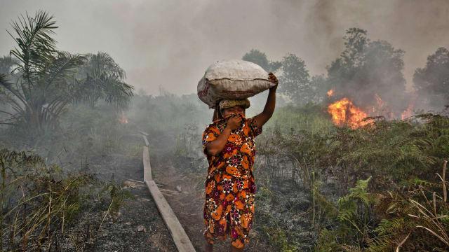 Pilkada dan Masa Depan Hutan Kalimantan Tengah