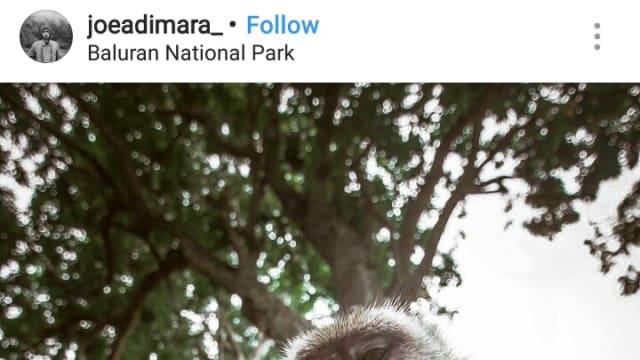Potret Keramahan Monyet Penghuni Pantai Bama, Situbondo