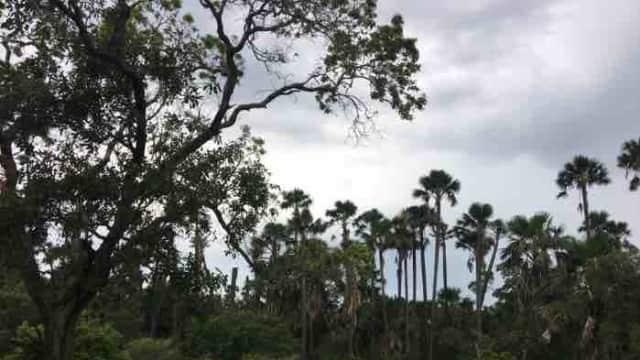 Menikmati Keindahan Taman Nasional Baluran