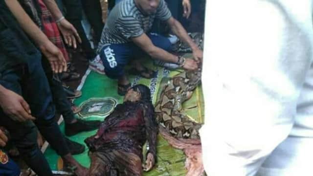 Wanita Di Sulawesi Tenggara Di Caplok Ular Phiton