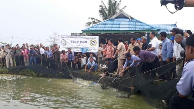 Sentra Ikan Patin Nasional Ada di Jambi?