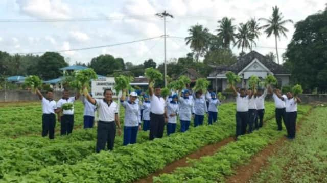 Penuhi Kebutuhan Sayur di Singkep, Lanal Dabo Panen Bayam