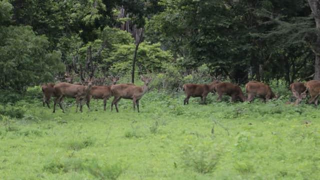 Mengunjungi Kera Pantai Bama di Baluran National Park