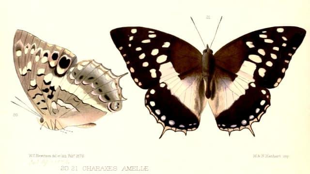 Setiap Tahun, 15 Ribu Spesies Baru Ditemukan