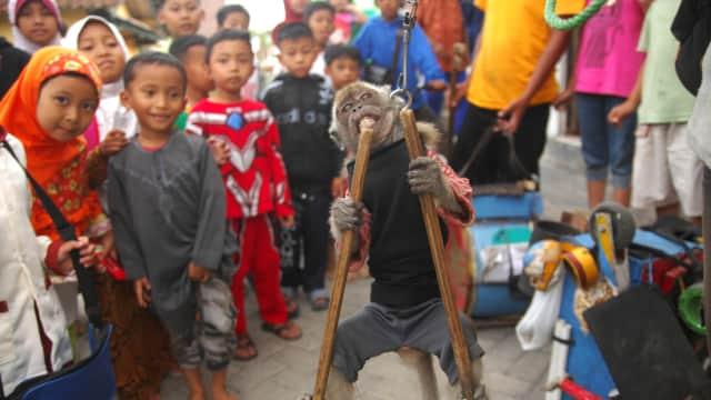 Topeng Monyet yang Acap Tak 'Berperikemonyetan'