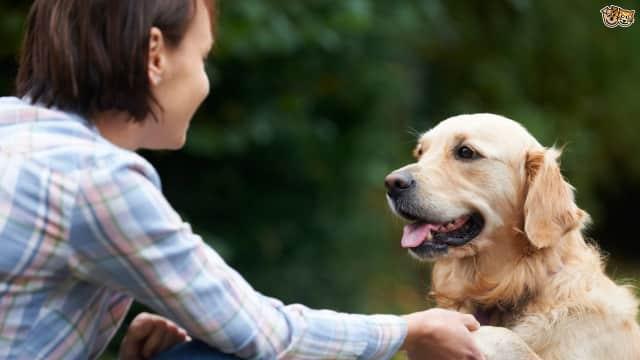 Menerjemahkan Gonggongan Anjing