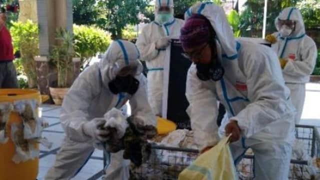 Sampah Popok Bikin Ikan-ikan Sungai Sidoarjo Jadi Betina