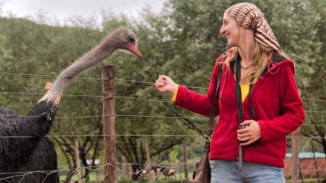 Menilik Pesona Ostrich Capital of the World di Afrika Selatan