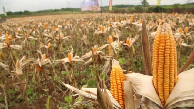 Pemerintah Daerah Diminta Kendalikan Konversi Lahan Pertanian