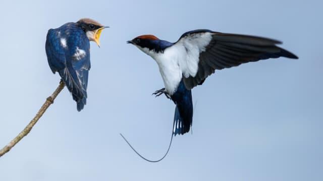 Burung-burung Realistis dari Kertas