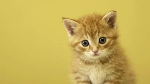Bete? Stalking 6 Akun Instagram Kucing dan Anjing Lucu Ini!