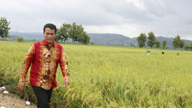 Serap Gabah, Upaya Pemerintah Jaga Harga Stabil dan Bantu Petani