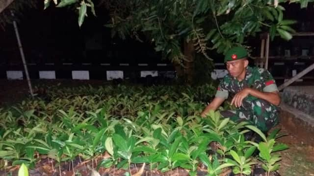 TNI Sukses Budi Daya Pohon Torem yang Terancam Punah