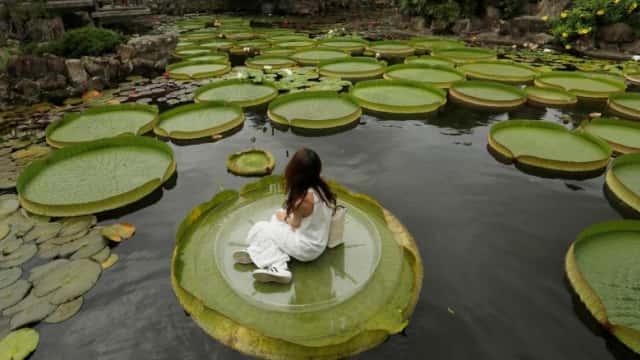 Shuangxi Park, Taiwan Ajak Pengunjung Duduk di Atas Bunga Lili Raksasa