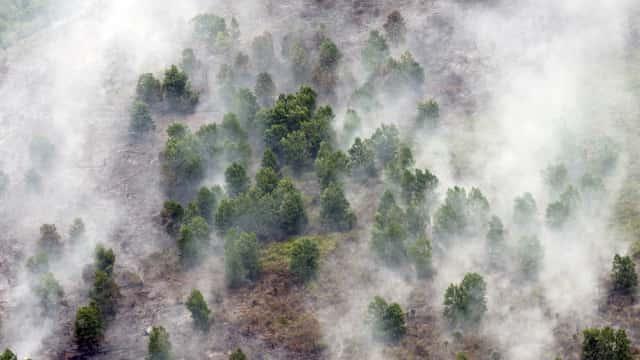 Titik Api Kebakaran Hutan di Merauke Berkurang hingga 80 Persen