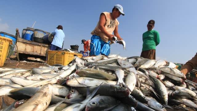 Tangkapan Ikan Nelayan Pasuruan Meningkat pada Triwulan Pertama 2018