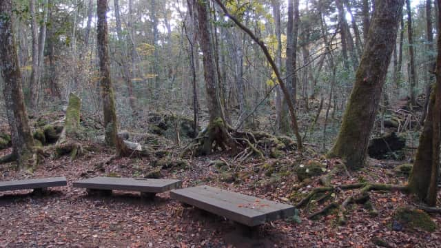 Balita di Jepang Selamat Setelah Tiga Hari Hilang di Hutan