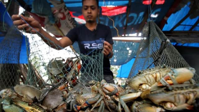 Kasus Kepiting Nelayan Samas: Hanya Wajib Lapor Saja