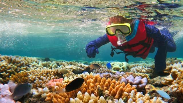Serunya Mengeksplorasi Great Barrier Reef, Situs Warisan Dunia UNESCO