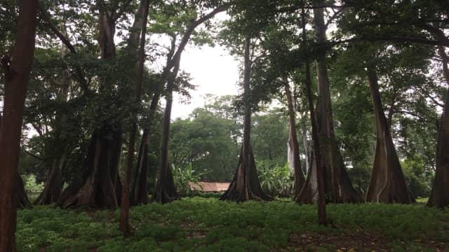 Selamat Hari Hutan Internasional, Bagaimana Kondisi Hutan Indonesia?