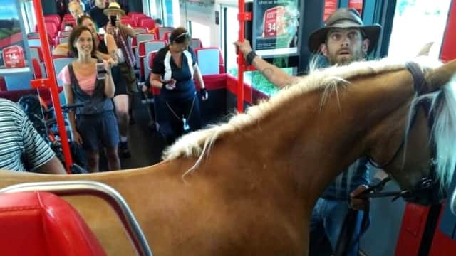 Pria Austria Picu Kehebohan karena Ajak Kuda Naik Kereta