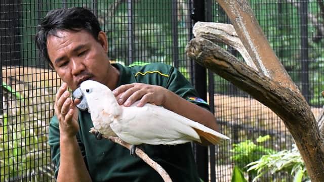 Kisah Pria Tuli yang Bisa 'Berbincang' dengan Burung di Singapura