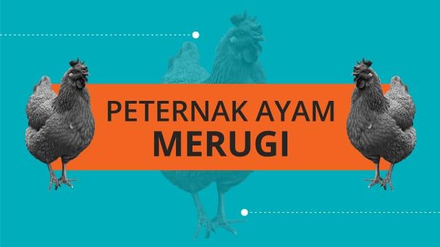 Infografik: Harga Ayam Turun Naik Bikin Peternak Panik