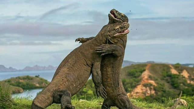 Selamat, Pulau Komodo Masuk 10 Besar Destinasi Terbaik di Asia
