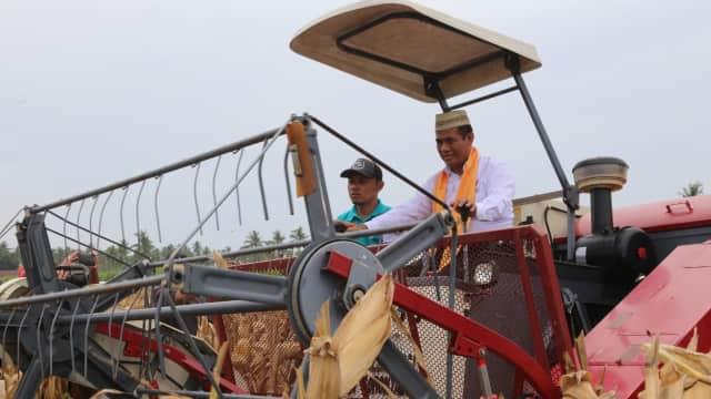 Gorontalo Ekspor Jagung ke Filipina, Petani Menikmati Rp 4 Triliun