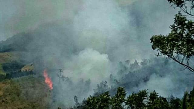 800 Hektar Hutan di Lereng Arjuno Terbakar