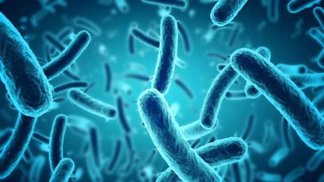 Bakteri Ini Disebut sebagai Makhluk Terkuat di Bumi