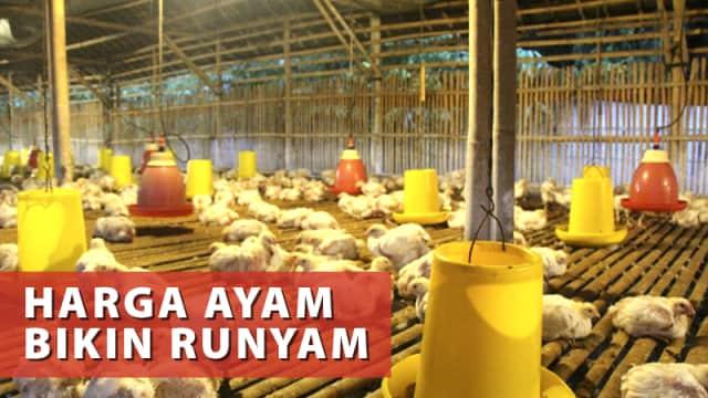 KPPU Soroti Masalah Industri Ayam Nasional yang Tak Pernah Selesai