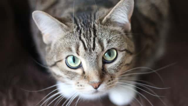 Cerita Kucing di Inggris Selamatkan Pemilik dari Kanker Payudara